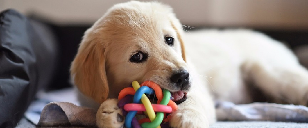 Snag A FREE Dog Toy For Your Four-Legged Friend!